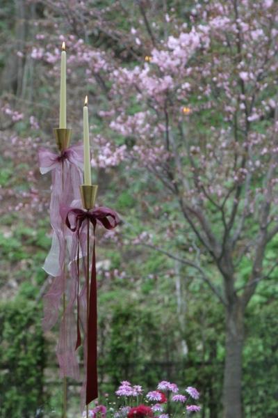 ジャルダンドゥボヌールの桜の木