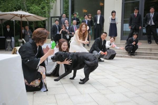 ペットと結婚式ならジャルダンドゥボヌール