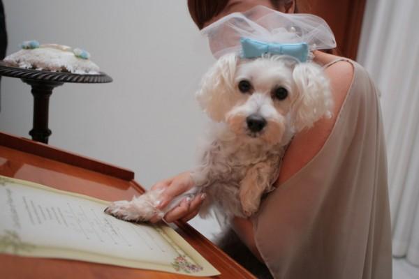 愛犬と結婚式|ジャルダンドゥボヌール