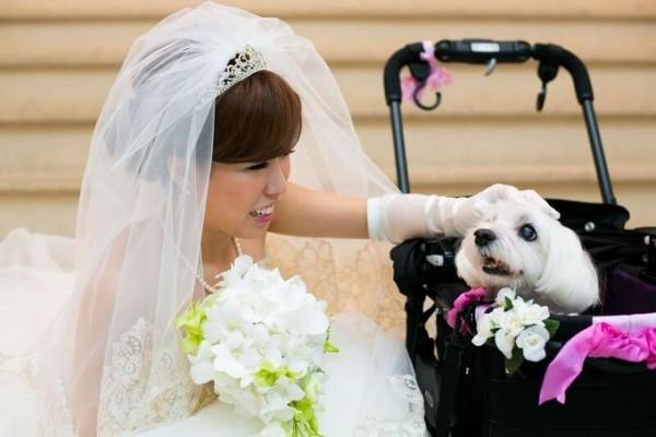 ペットと花嫁