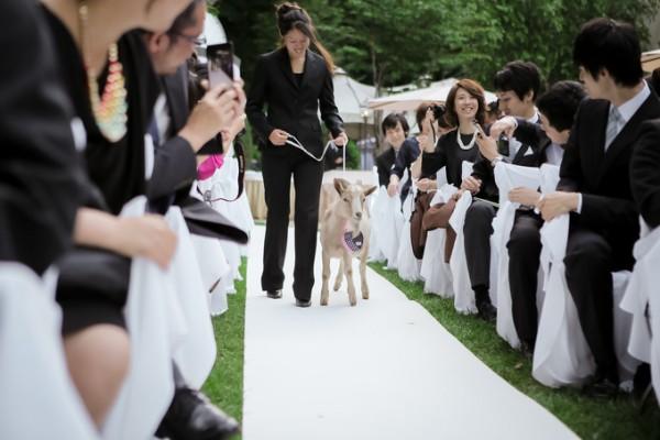 動物のいる結婚式