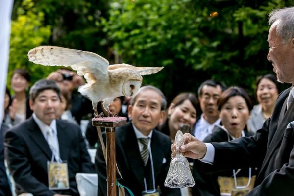 フクロウ|札幌の結婚式場|ジャルダンドゥボヌール