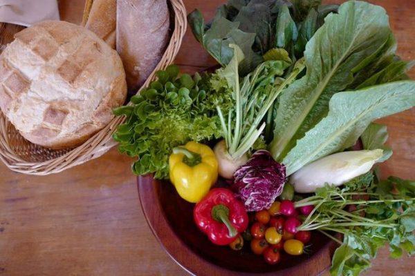 食材|野菜